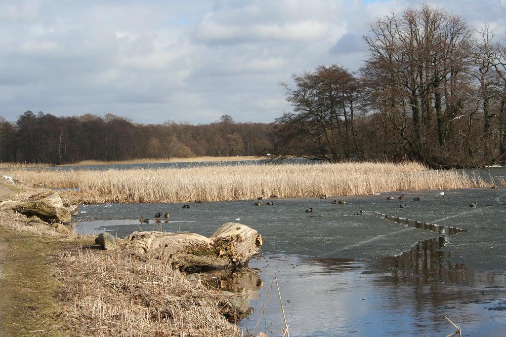 Sorø Sø i marts