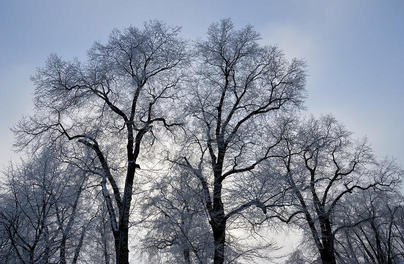 03 träd