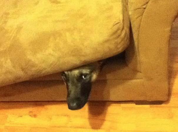Όταν τα ζώα παίζουν κρυφτό (17)