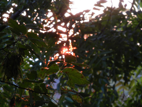 Sunset _ 4179