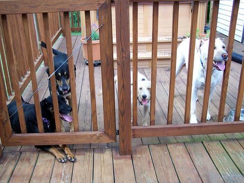 Dogs & Bella 71407