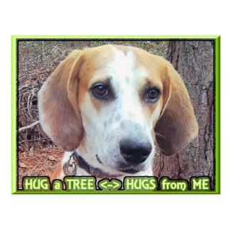 Hound Dog Tree Hugger Postcard