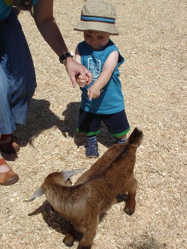 Mogrunt meets Goat