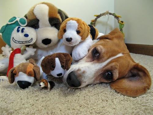 Band of Beagles