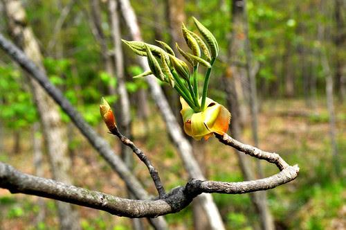 grasping leaves