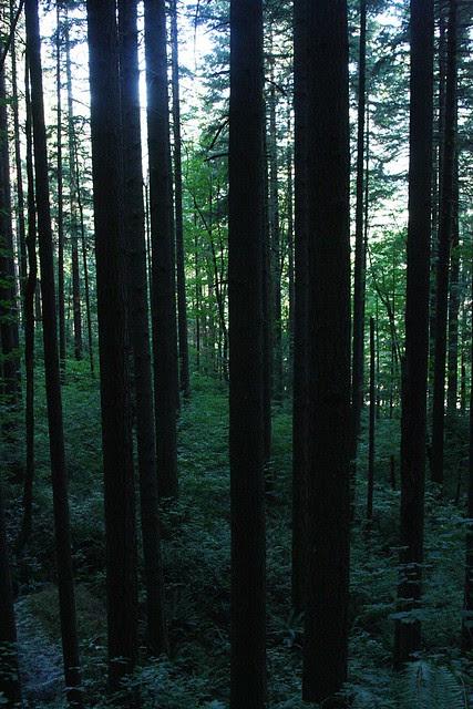 Forest, Elowah Falls
