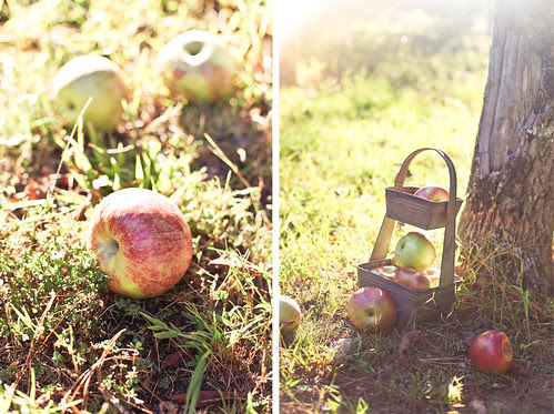 apple pickin'