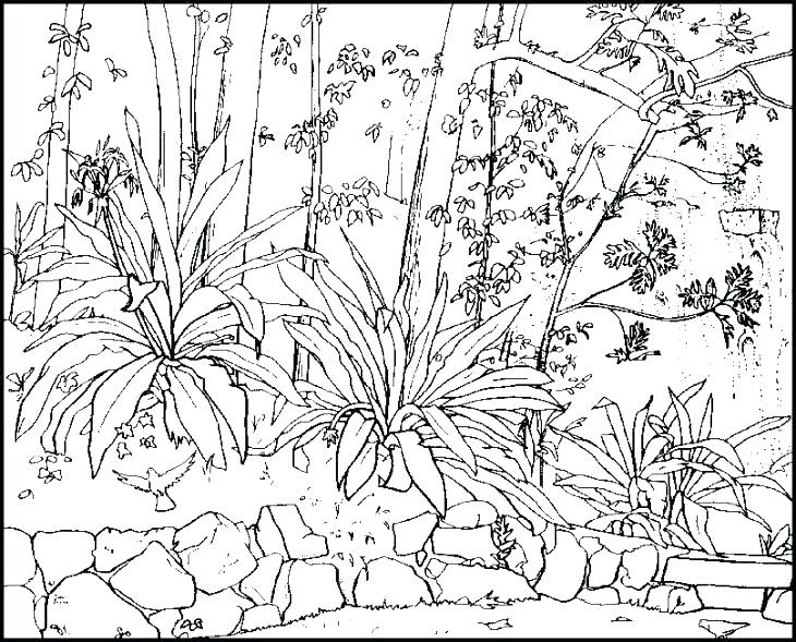 Free Printable Nature Coloring Pages For Adults at ...