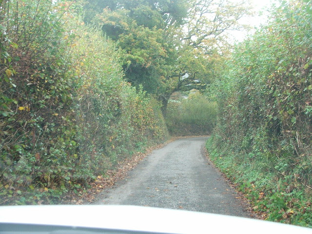 Hedgerow in Devon