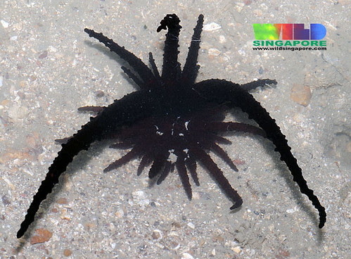 Unidentified sea anemone