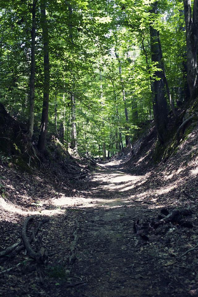 sunken trail, natchez trace parkway (small)