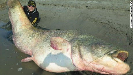 Dino Ferrari poses with a 280-pound catfish he says he caught in Italy's Po River.