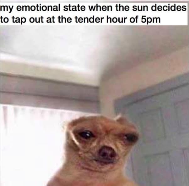 Sad Dog Phone Call Meme