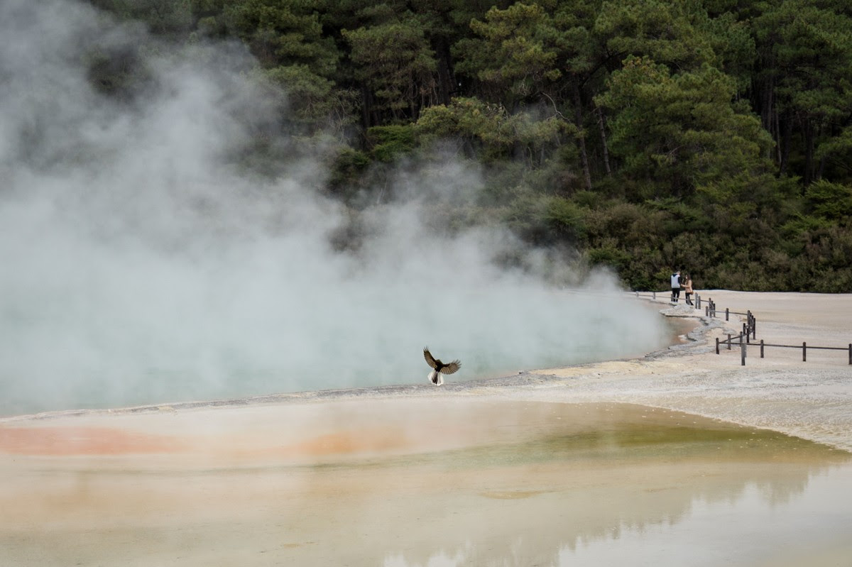 wai-o-tapu-new-zealand-volcanism-1
