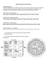 Fajarv: Protein Synthesis Worksheet Answers Pdf