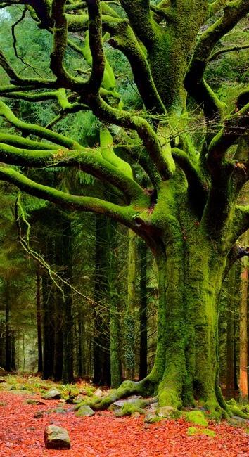 nature, green tree