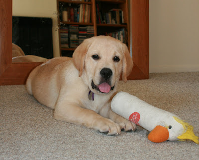 Puppy Cooper and his stuffed bird