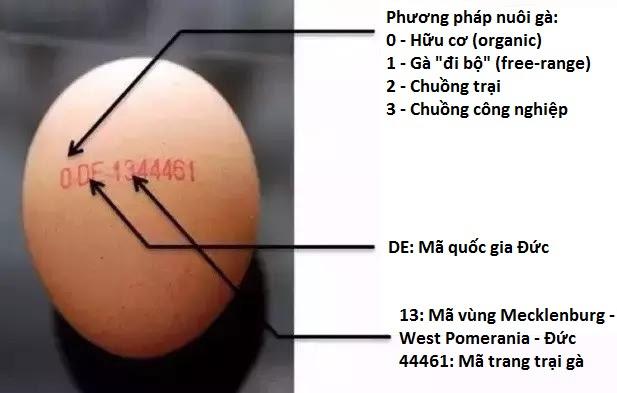 Không chỉ người mà cả… trứng gà cũng có chứng minh thư, bạn biết không? - Ảnh 2.