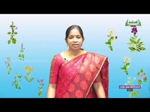 12th தாவரவியல் அலகு 1 பாடம் 1 தாவரங்களில் பாலிலா Kalvi TV