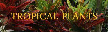 Plants In The Tropical Rainforest And Their NamesFuneral ...
