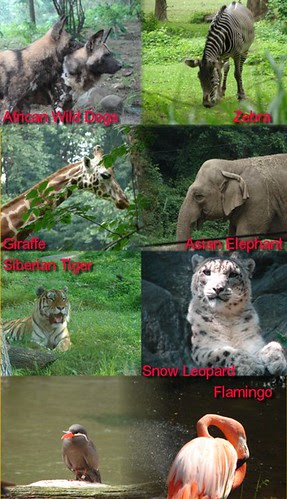 Zoo Collage1