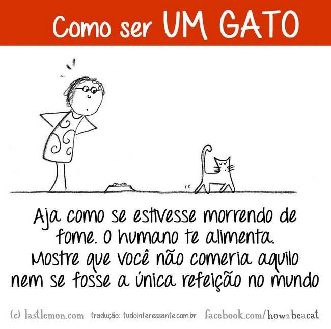 como-ser-um-gato-9