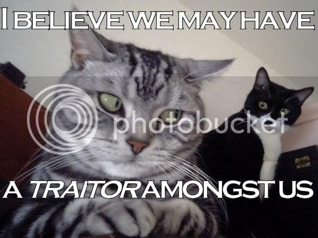 http://img.photobucket.com/albums/v739/SweetLooly/cat-traitor.jpg