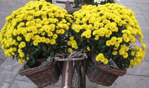 Polkupyörä ja kukat