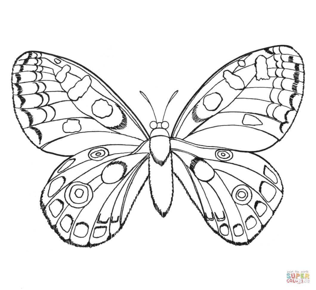蝶 ぬりえ