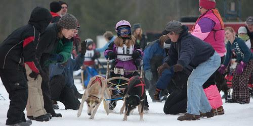 dog sled-3