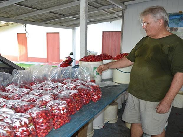 O técnico agrícola Jaime Caliman, 62 anos, é reconhecido como o maior produtor de acerola do Brasil. (Foto: Luana Leão/G1)