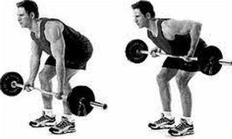 perform reverse grip bent  barbell rows hubpages