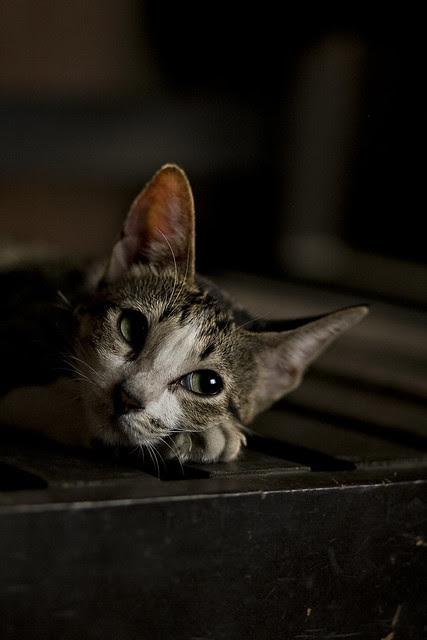 emeow cat