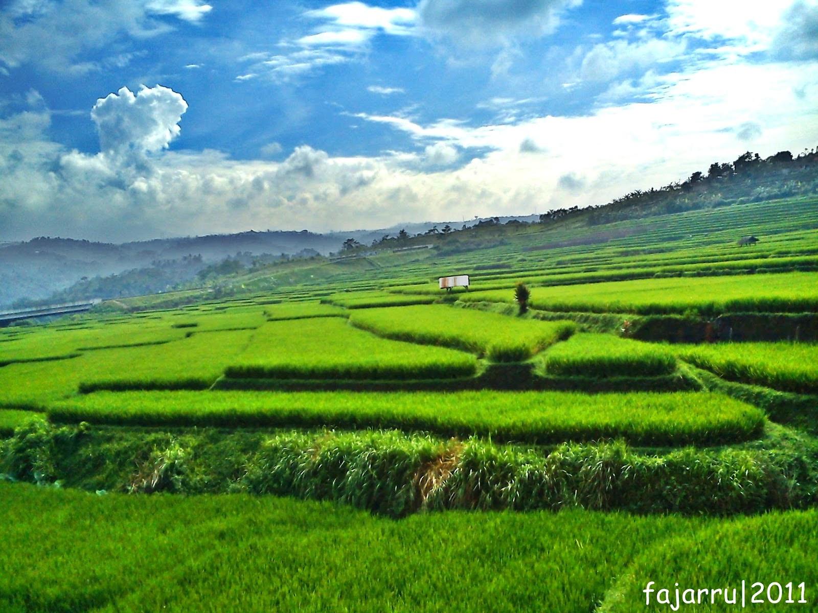Gambar Gambar Pemandangan Sawah Blogger Jawa