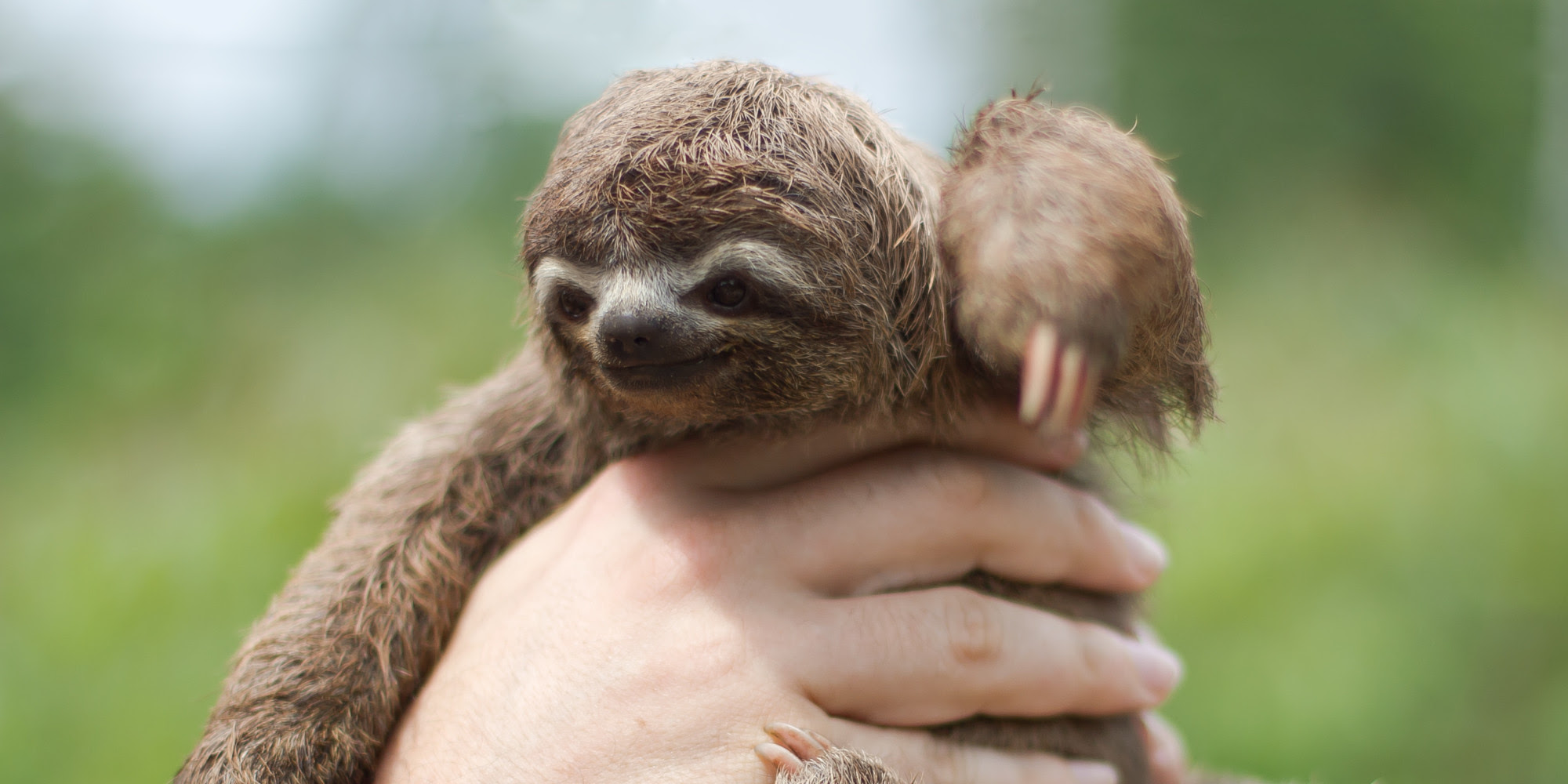 Image result for best pics of baby sloths