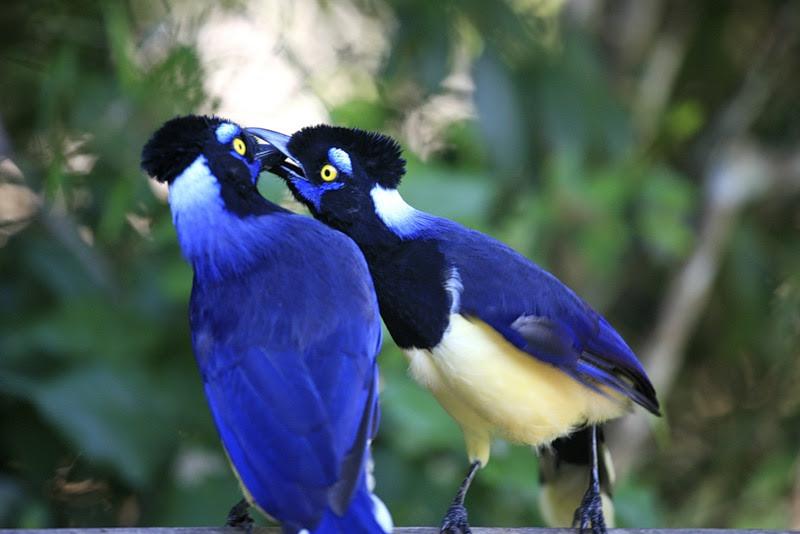 Животные национального парка Водопады Игуасу. Птицы