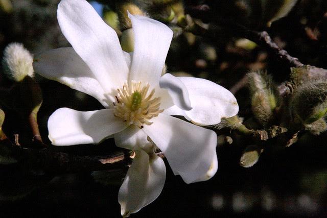 flowers, february 2010