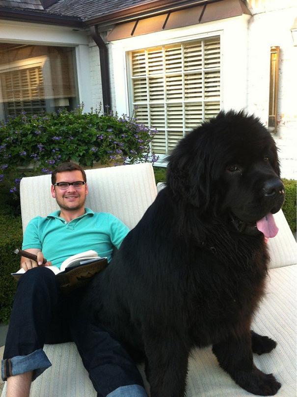 41. 70-pound pet size dog