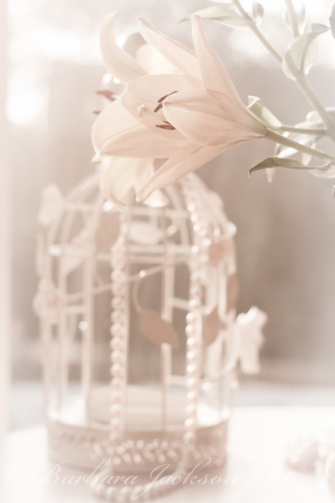 Flower and bird cage 3