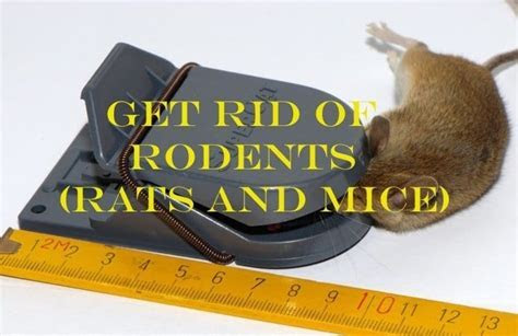 20 Ultimate Home Remedies to Get Rid of Rodents (Rats and Mice) ? Easy, Inexpensive, and Natural