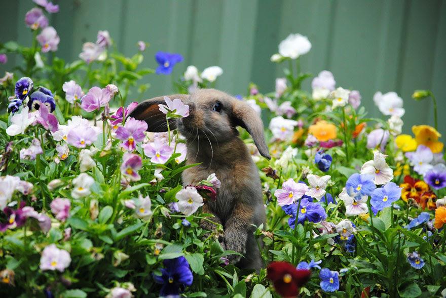 Coelho Flores de cheiro