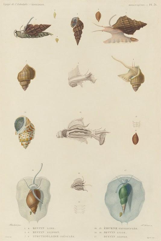 Voyage de la Corvette (atlas) by Jules Dumont d'Urville, 1833 69