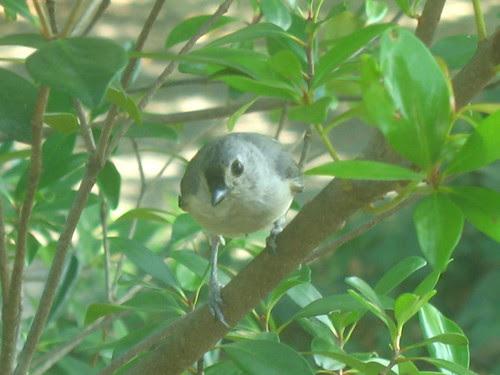 nat note bird IMG_2469