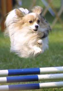Maybe this pup should have been on our flying dog list for Edgewater, Colorado!