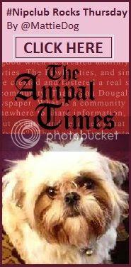 mattiedog anipal times
