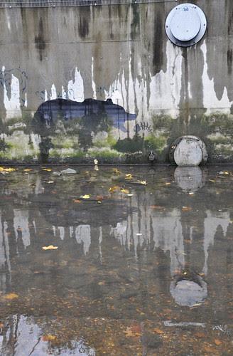 Banksy Bear NoLionInEngland