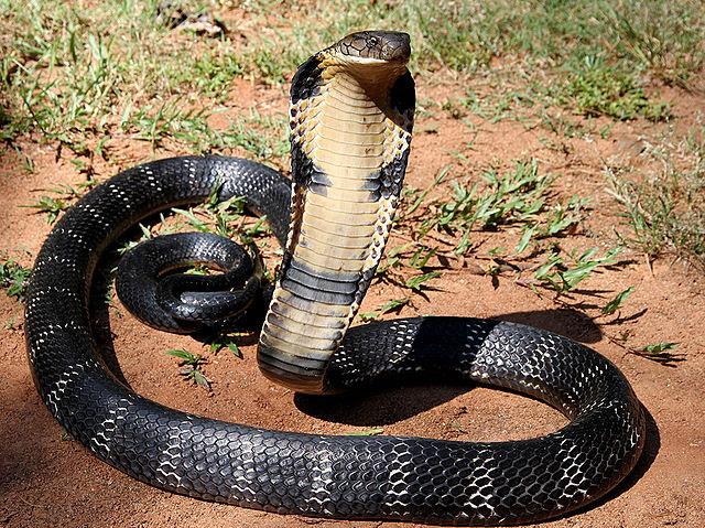 Resultado de imagen de Variadas serpientes
