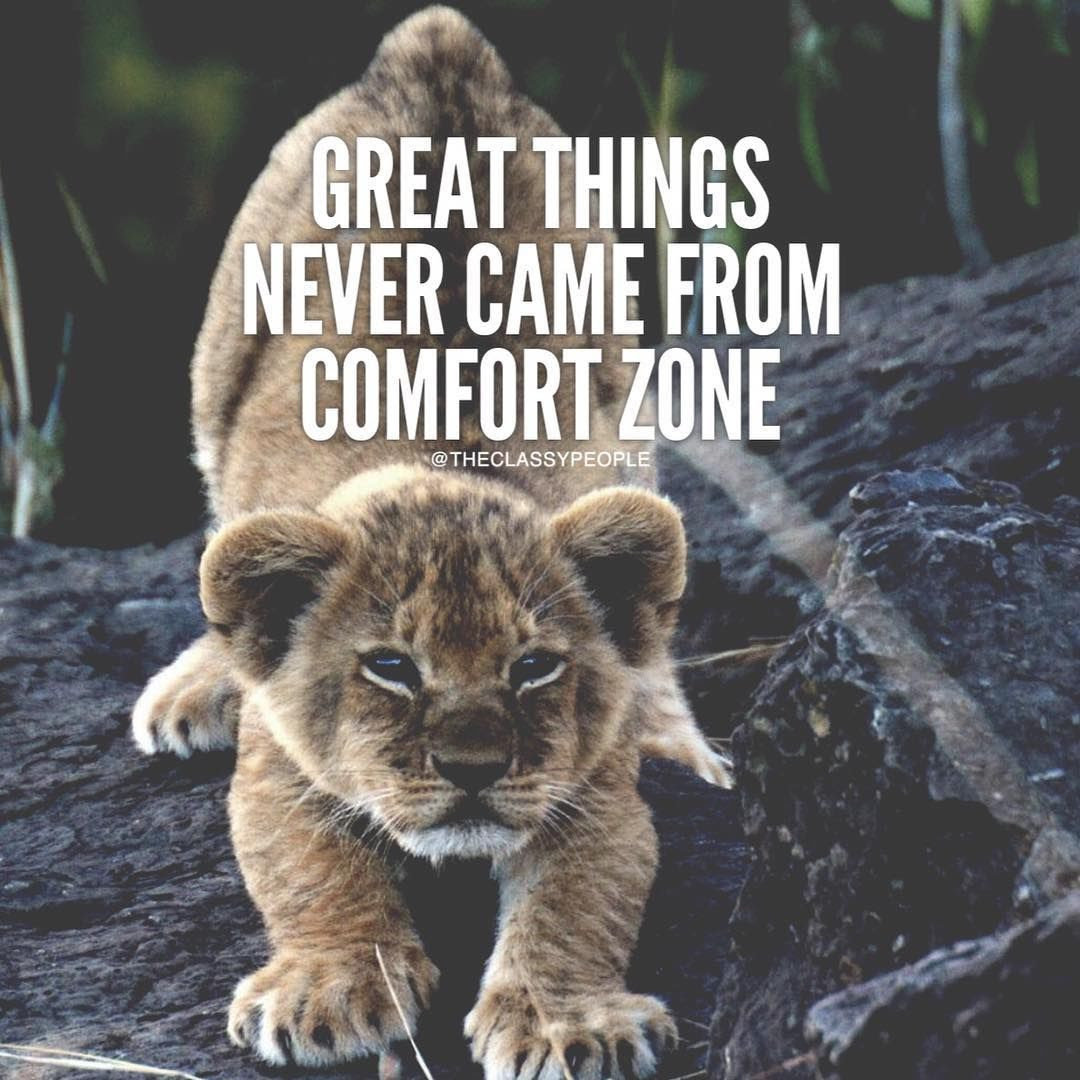 Great Things Never Came From Comfort Zone Pictures Photos And