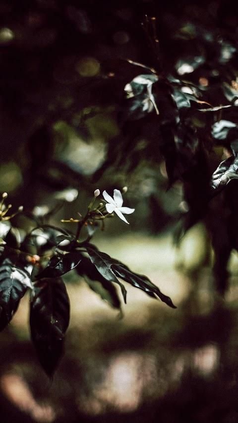 خلفية لورد الطبيعة الجميلة بدقة عالية hd
