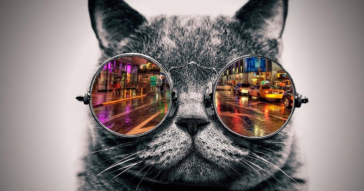 Wallpaper Kartun Kucing Lucu Biru - Gambar Ngetrend dan VIRAL